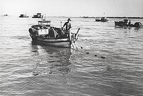 Gillnetting wikipedia for Gill net fishing