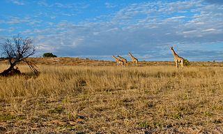 Kgalagadi District District in Botswana
