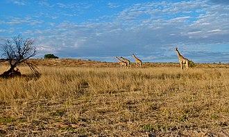 Kgalagadi District - Kgalagadi Transfrontier Park