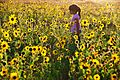 Girl Walking in Sunflowers, Great Sand Dunes National Park (12660645724).jpg