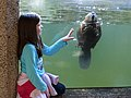 Girl and beaver with glass in between. Privacy release status unknown. (06c5fecb2ef847d98dda05f9aa5f1b9a).jpg