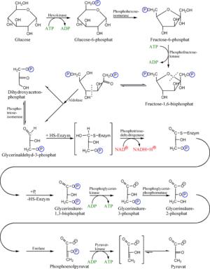 Ruta metabólica