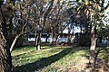 Godoy Cruz, Mendoza Province, Argentina - panoramio (2).jpg