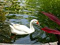 Graceful Duck.jpg