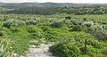Green poppies fence (425863303).jpg