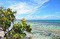 Küste im Réserve naturelle nationale des îles de la Petite-Terre, Guadeloupe