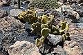 Guatiza - Jardín de Cactus - Lanzarote - J40.jpg