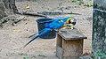 Gunsi parrot (33174327750).jpg