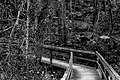 Gwinnett County, GA, USA - panoramio.jpg