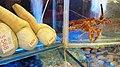 HK 灣仔 Wan Chai 權發海鮮酒家 Kwun Fat Seafood Restaurant Lobster water tank Geoduck 象拔蚌.jpg