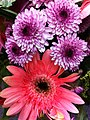 HK Central City Hall Exhibition Gallery pink Daisy flowers 9-Dec-2012.JPG