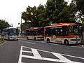 Hachiko-Bus trio October-2010.jpg
