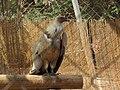Hai Bar Yotvata Nature Reserve 42.jpg