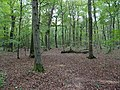 Hambach forest 67.jpg