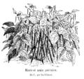 Haricot nain parisien Vilmorin-Andrieux 1904.png