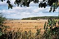 Harvesting of field near Kingstanding Farm - geograph.org.uk - 258460.jpg