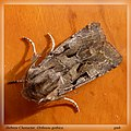 Hebrew character - Flickr - gailhampshire.jpg