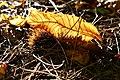 Herbst im Park - Blätter, Bäume, Seeufer und Wege im Wandel der Jahreszeiten. (2).jpg