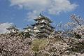 Himeji cherry blossoms.jpg