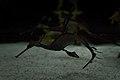 Hippocampus (26769600918).jpg