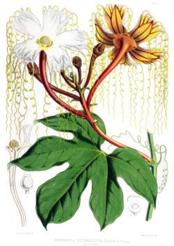 meaning of cucurbitaceae