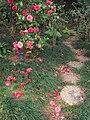 Hong Kong Botanical Garden - IMG 9642.JPG