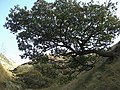 Horizontal tree in Charnel Clough - geograph.org.uk - 1538371.jpg
