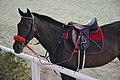 Horse Club Riyadh (6335938717).jpg