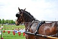 Horse harness closeup.jpg