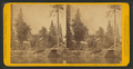 Huching's Hotel and Sentinel Rock, Yo Semite Valley, by John P. Soule 2.png