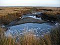 Humboldt bay eureka (377591062).jpg