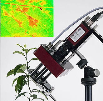 Chlorophyll fluorescence - Fluorescence image (Ft value) of adaxial leaf surface