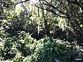 Iguape - SP - panoramio (270).jpg