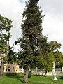 Ihlamur Palace Garden 12.jpg
