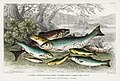 Illustration from A History of the Earth and Animated Nature by Oliver Goldsmith from rawpixel's own original edition of the publication 00067.jpg