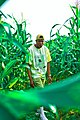 Image of Drims in a cornfield 01.jpg