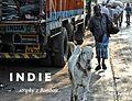 Indie-Bombaj-Vyherce-CFK-roku-2015.jpg