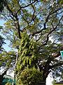 Infanta,Pangasinanjf0215 28.JPG