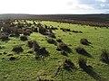 Islands of grass, Denbigh Moors - geograph.org.uk - 327515.jpg