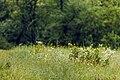 Izvoare – Risipeni, monument al naturii img 022. Vegetatia.jpg