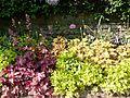 Jardin Darcy (15).jpg