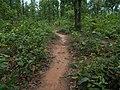 Jungle12.jpg