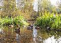 Jyväskylä - birds.jpg