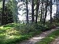 Kříž severně od Najdku u rozcestí v lese (Q80457932).jpg