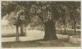 KITLV - 26880 - Kleingrothe, C.J. - Medan - Promenade in Medan, Sumatra's east coast - circa 1905.tif