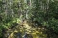 Kanāls starp Drīdzi un Ota ezeru - panoramio.jpg