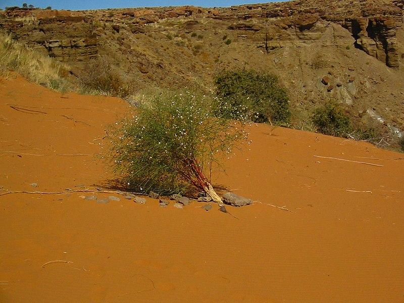 File:Karas Region, Namibia - panoramio (10).jpg