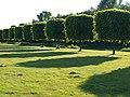 Kastenbäume - panoramio.jpg
