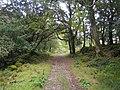 Killarney National Park - geograph.org.uk - 260400.jpg