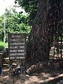 Killing tree Choeung Ek 2.jpg